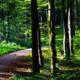 Weg, der durch einen gründen Wald führt (Bild-Copyright: Alexas Fotos - via Pixabay)